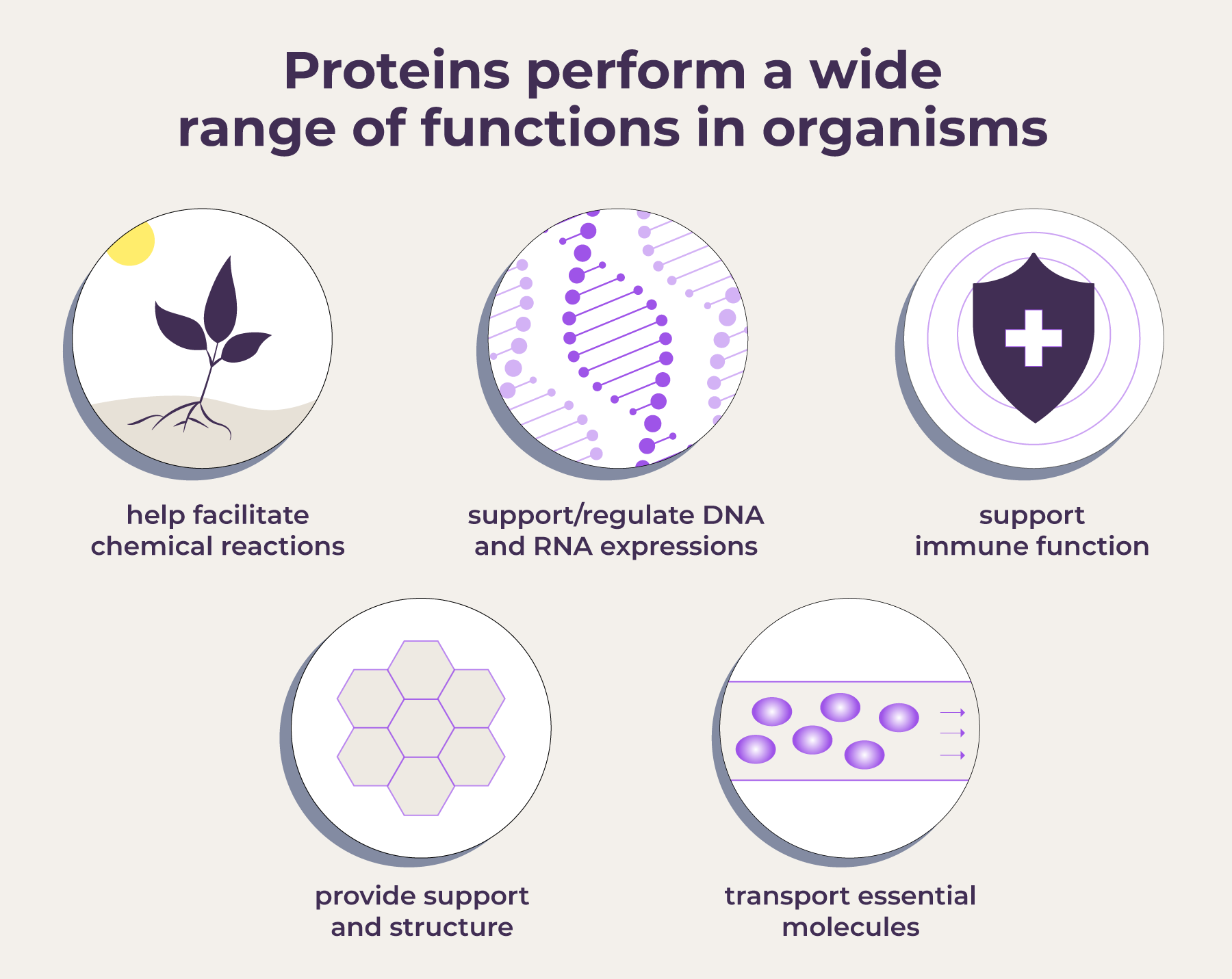PD-Protein-Functions